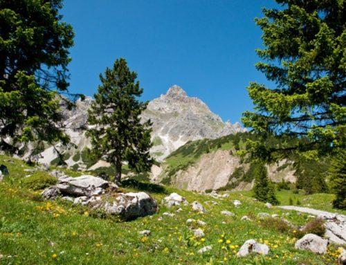 Zirbenholz hat positive Auswirkungen auf Kreislauf, Schlaf, Befinden und die vegetative Regulation.